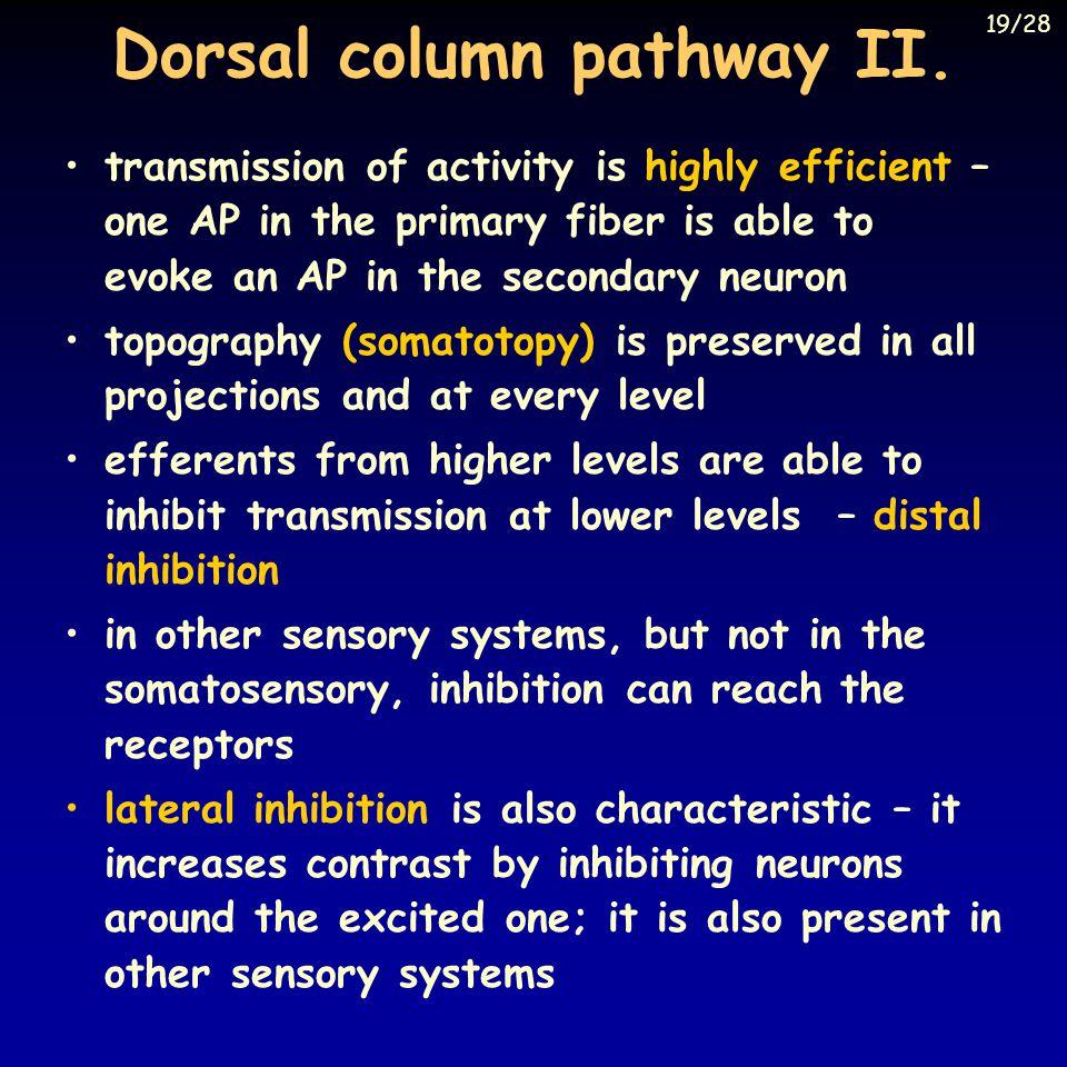 Dorsal column pathway II.