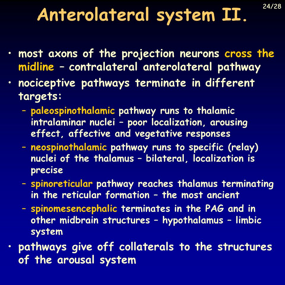 Anterolateral system II.