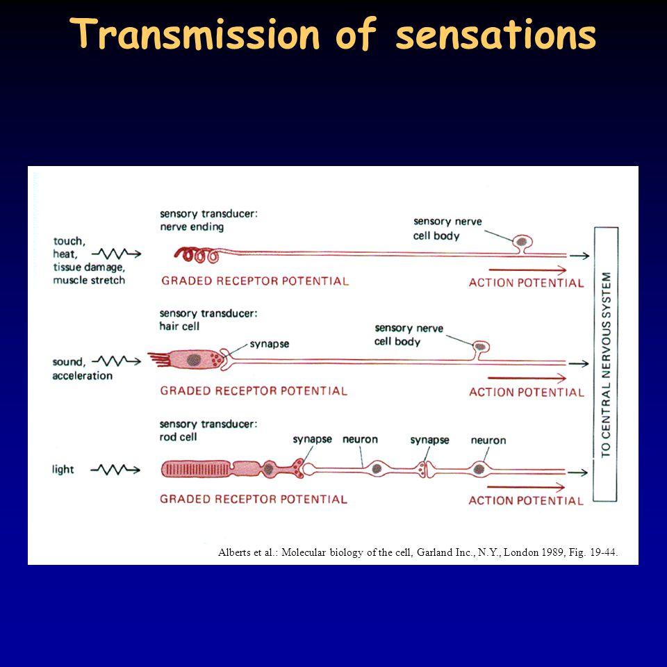 Transmission of sensations