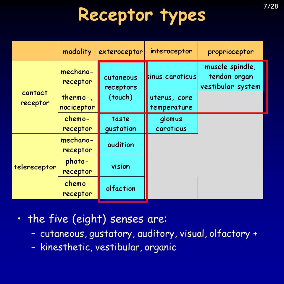 Receptor types the five (eight) senses are: