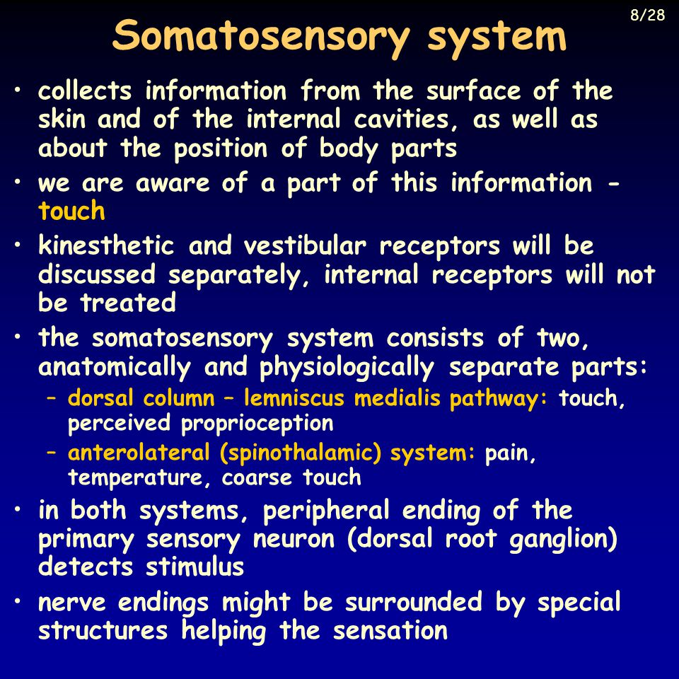 Somatosensory system 8/28.