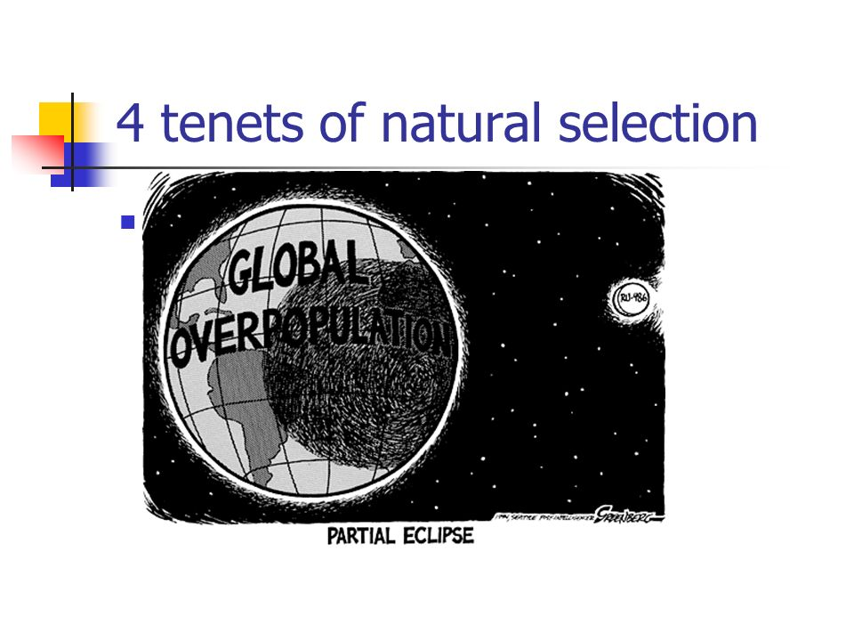 4 tenets of natural selection