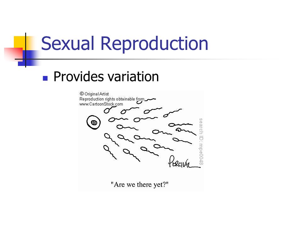 Sexual Reproduction Provides variation