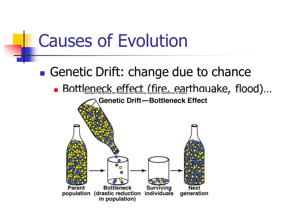 Causes of Evolution Genetic Drift: change due to chance