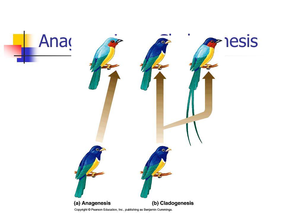 Anagenesis vs. Cladogenesis