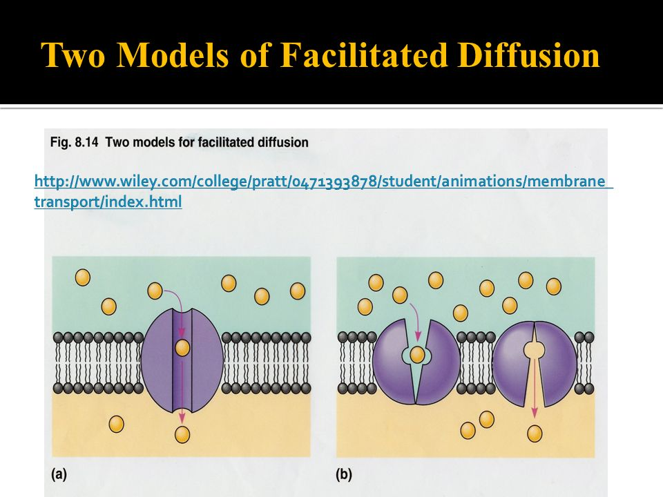 Two Models of Facilitated Diffusion