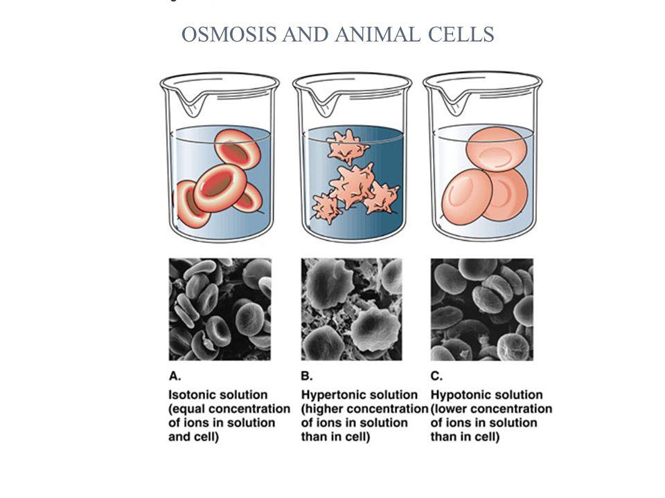 osmosis and diffusion via dialysis tube Lab 1 - egg osmosis and diffusion lab 1 - egg osmosis and diffusion 1587 words aug 17th, 2013 7 pages osmosis and diffusion via dialysis tube.