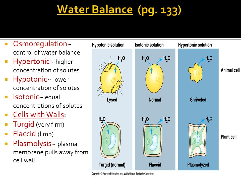 Water Balance (pg. 133) Osmoregulation~ control of water balance