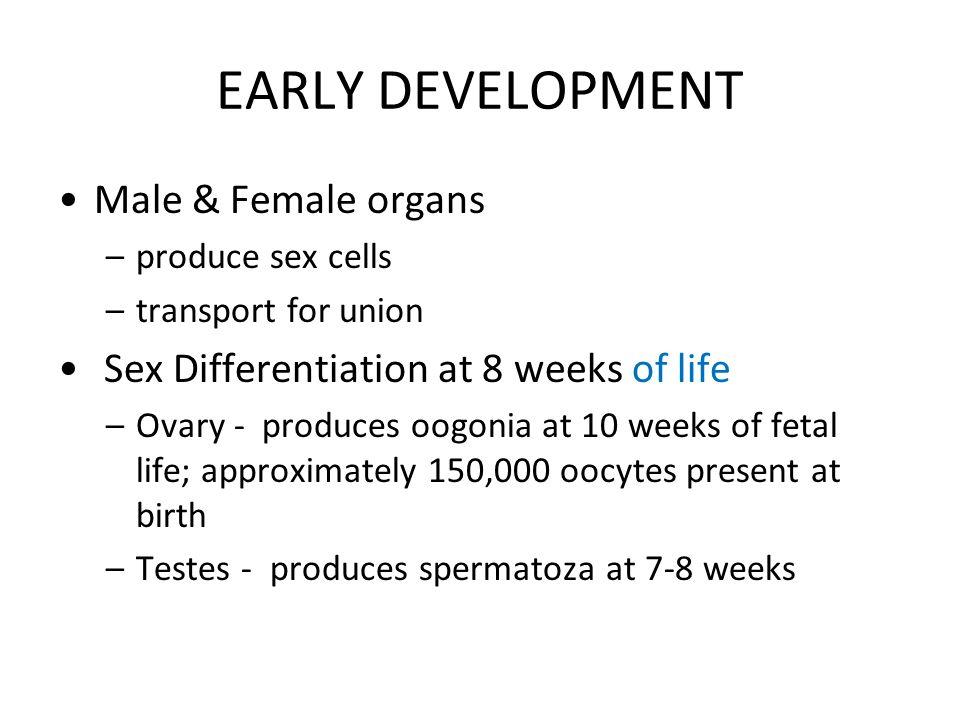 EARLY DEVELOPMENT Male & Female organs