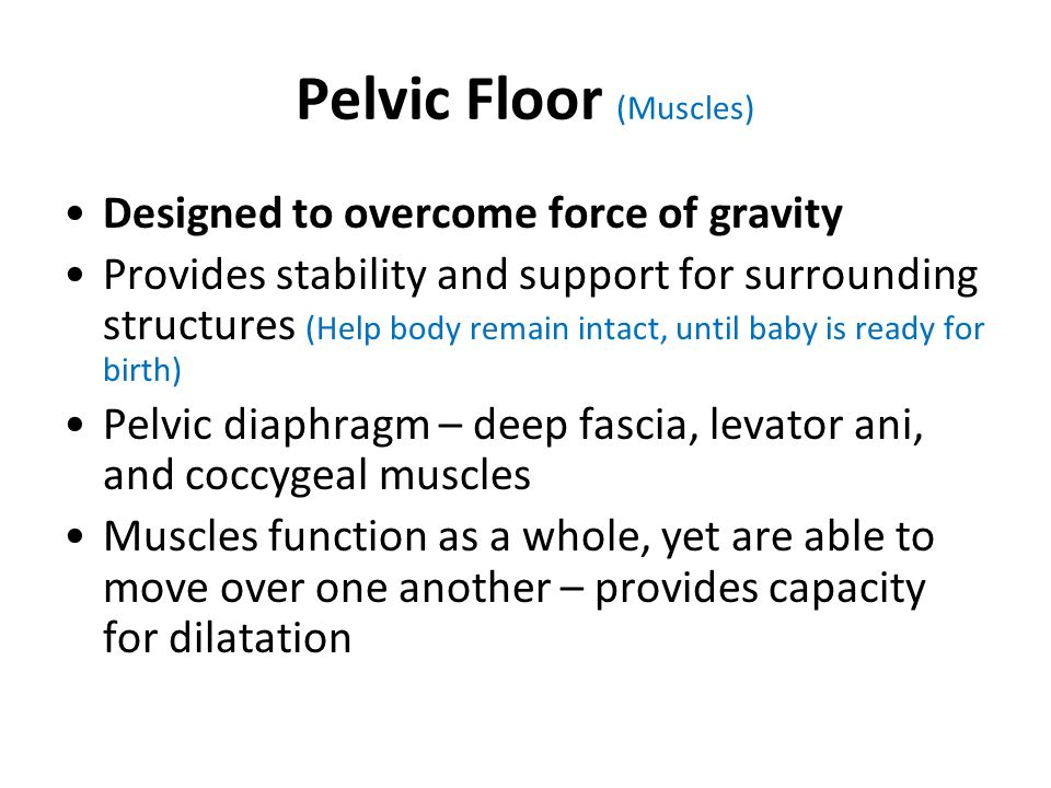 Pelvic Floor (Muscles)
