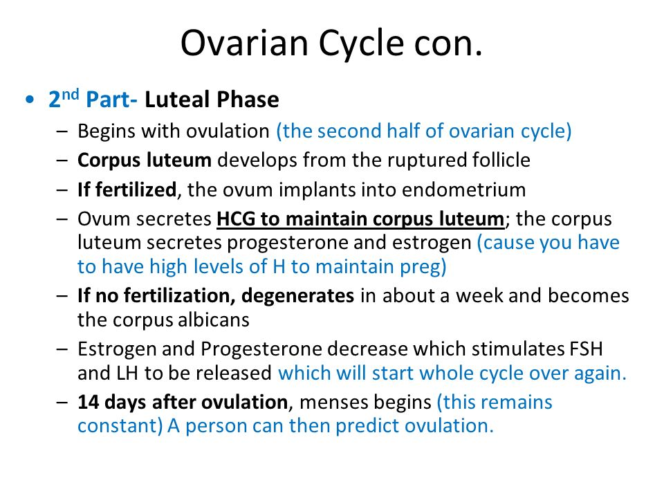 Ovarian Cycle con. 2nd Part- Luteal Phase