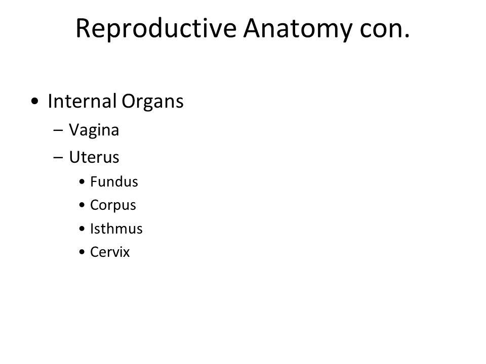 Reproductive Anatomy con.