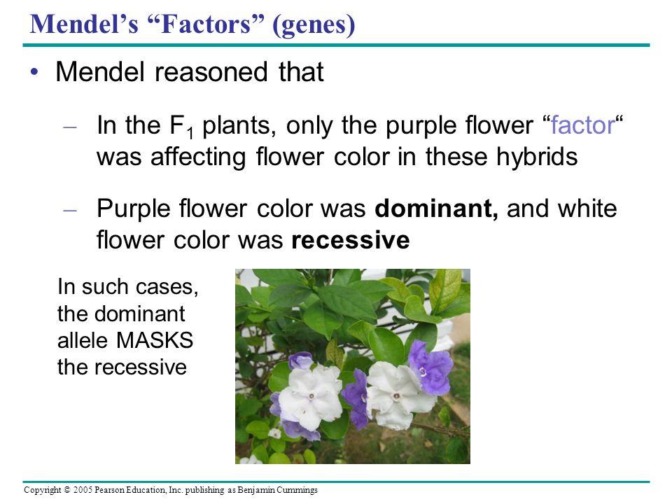 Mendel's Factors (genes)