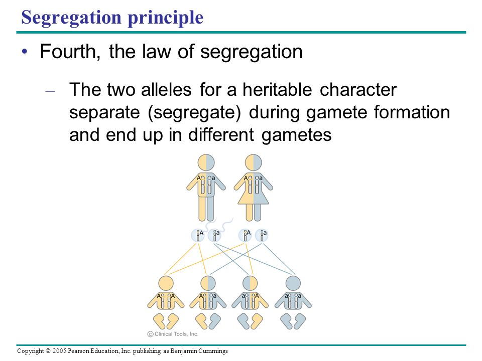 Segregation principle