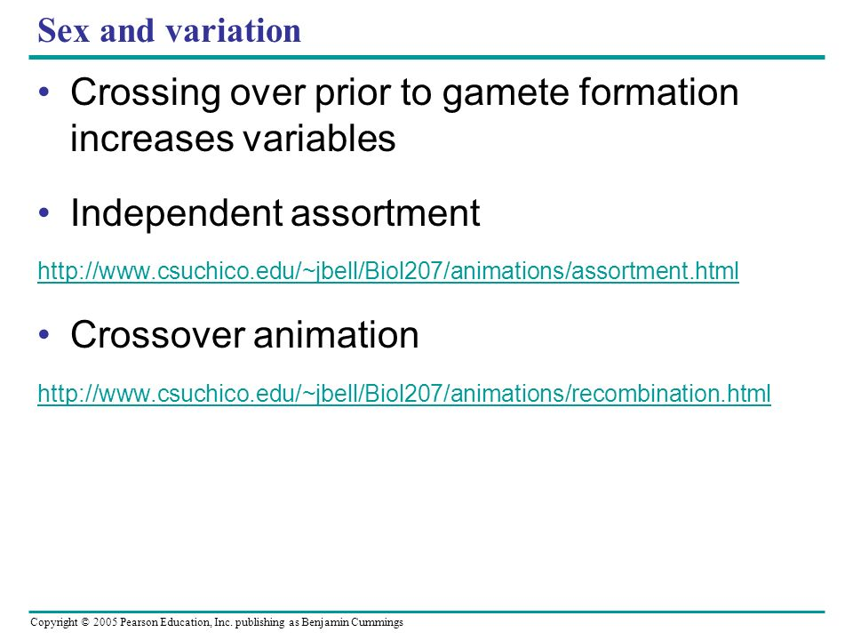 Crossing over prior to gamete formation increases variables