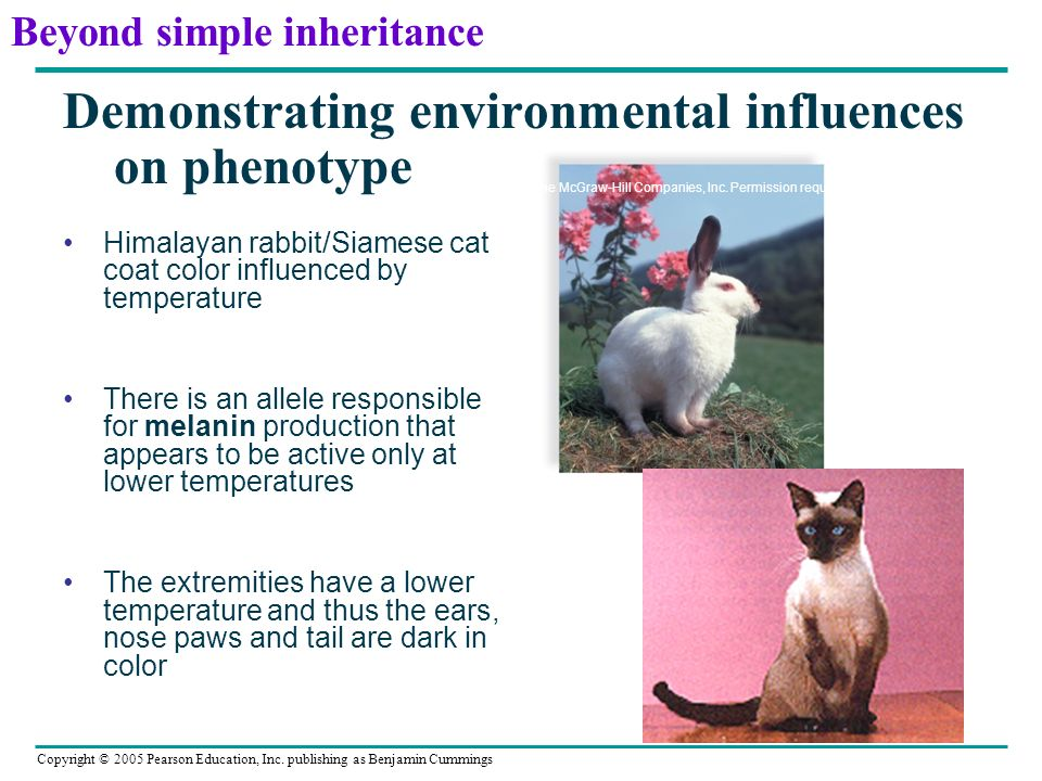 Demonstrating environmental influences on phenotype