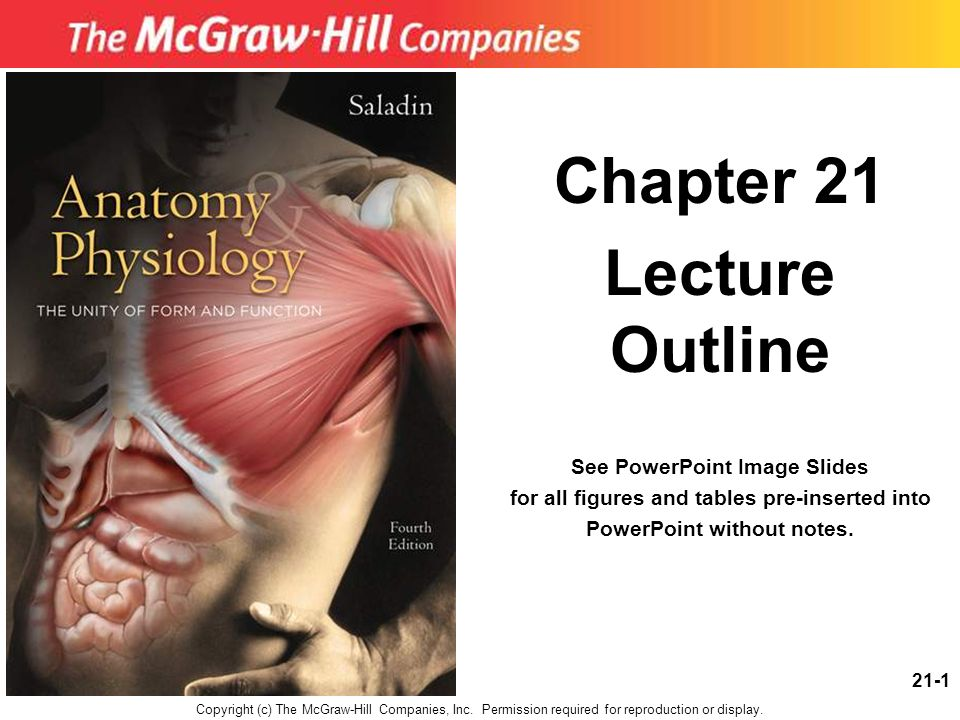 Chapter 21 Lecture Outline - ppt video online download
