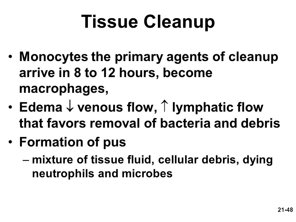 Tissue Cleanup Monocytes the primary agents of cleanup arrive in 8 to 12 hours, become macrophages,