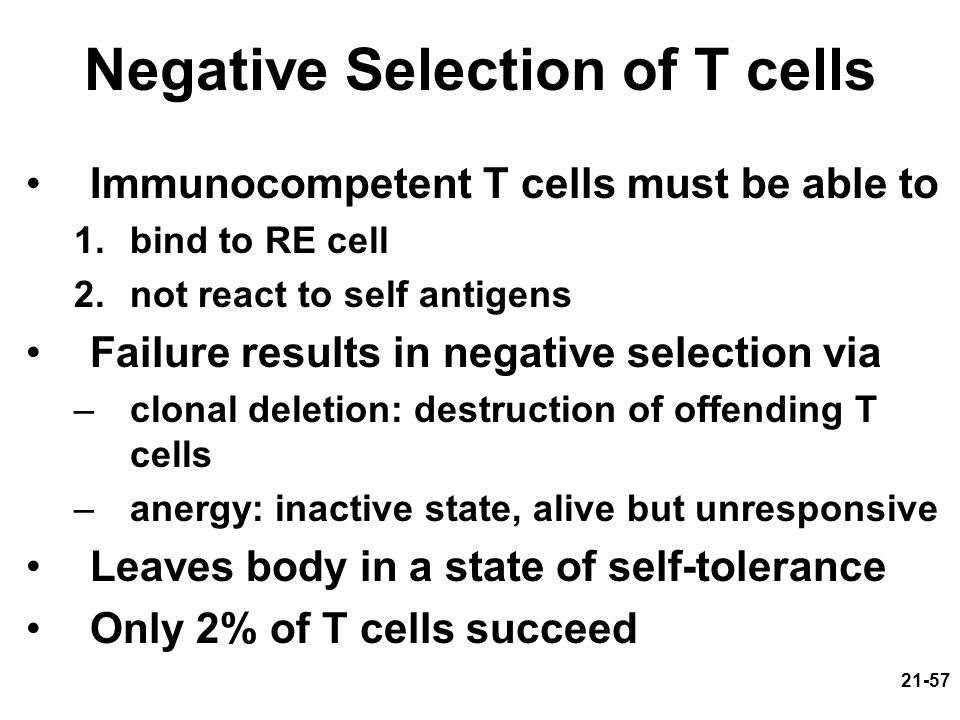 Negative Selection of T cells