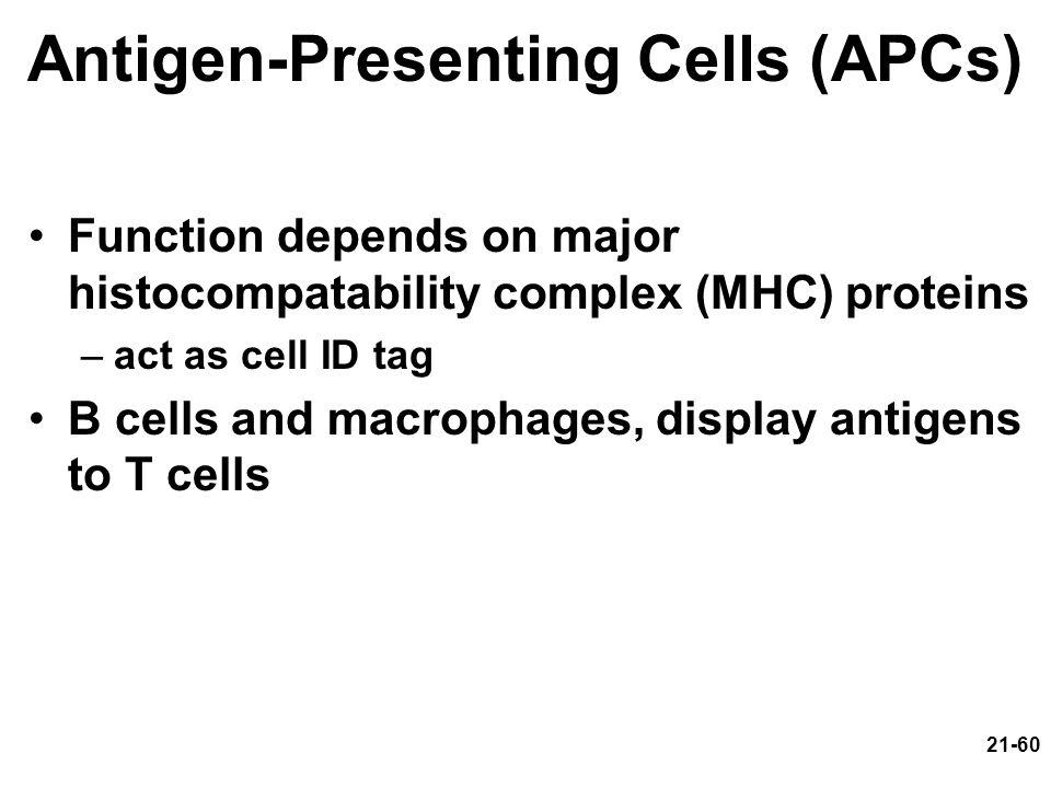 Antigen-Presenting Cells (APCs)