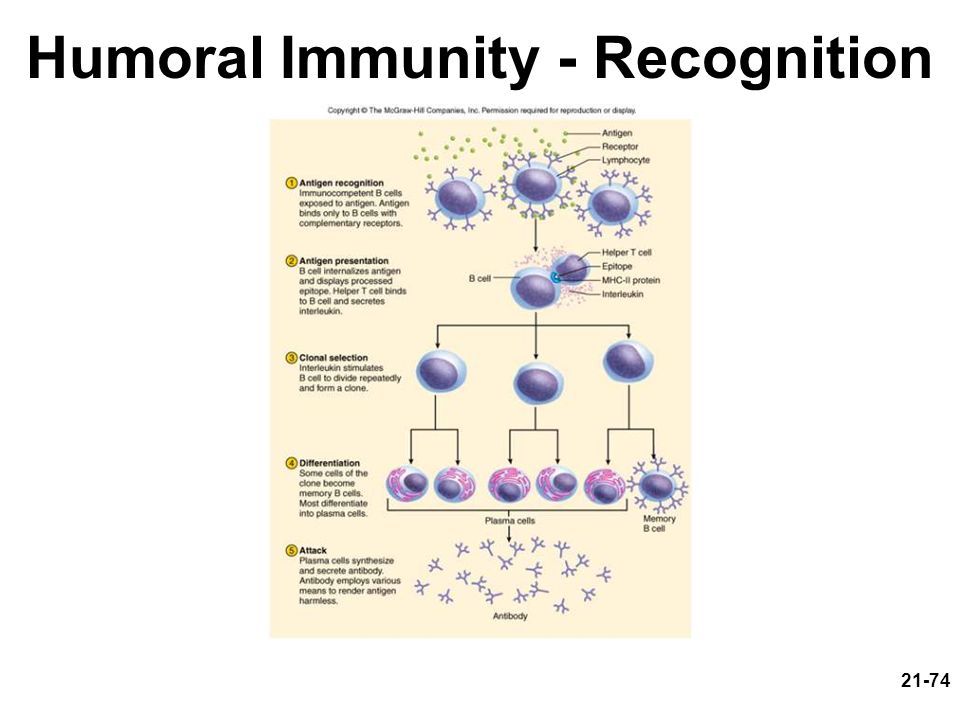 Humoral Immunity - Recognition