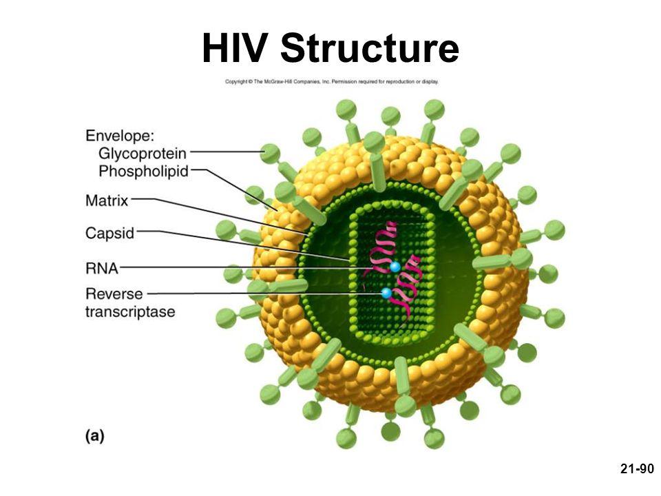 HIV Structure
