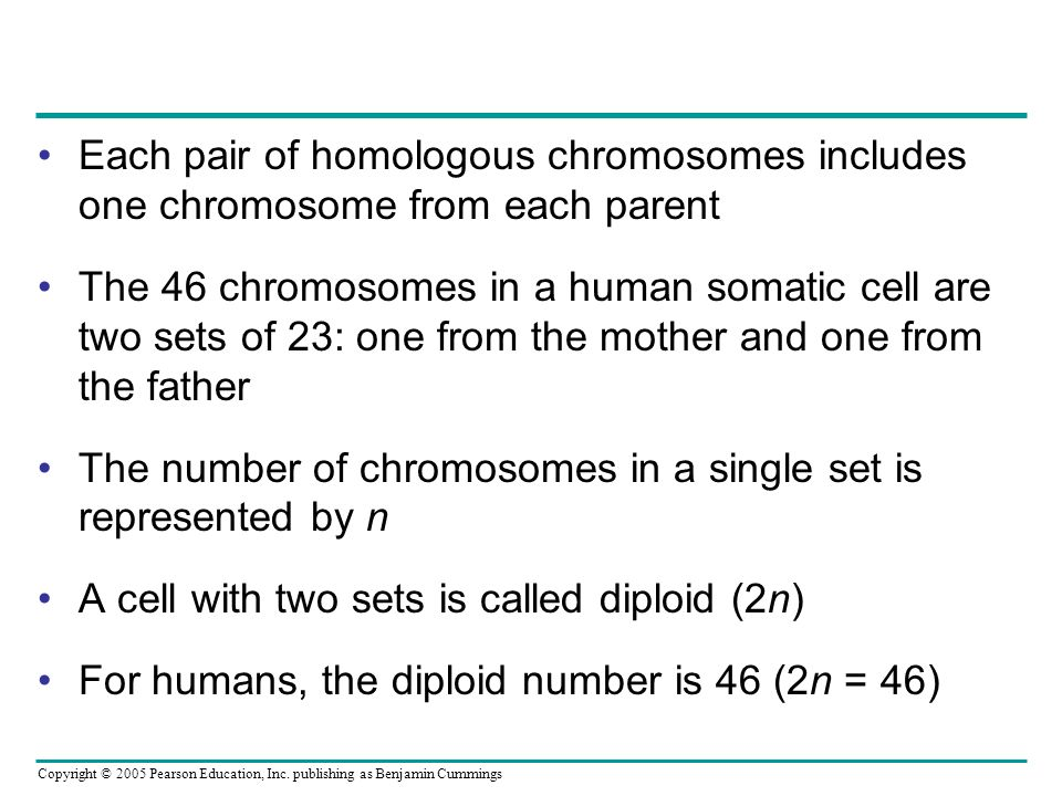 Each pair of homologous chromosomes includes one chromosome from each parent