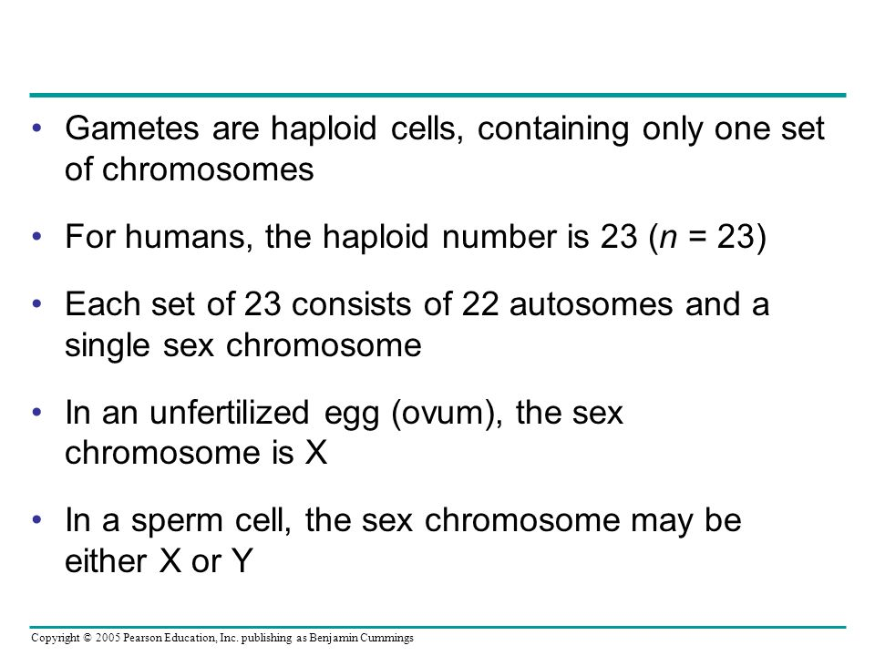 Gametes are haploid cells, containing only one set of chromosomes