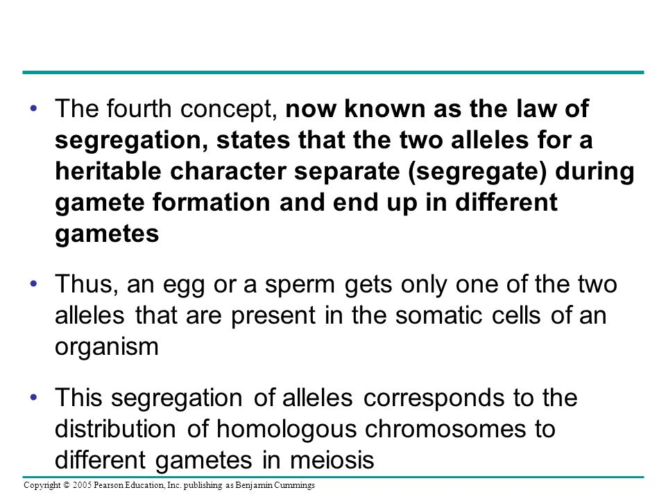 The fourth concept, now known as the law of segregation, states that the two alleles for a heritable character separate (segregate) during gamete formation and end up in different gametes