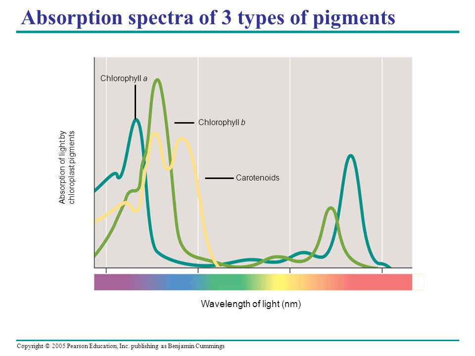 Absorption spectra of 3 types of pigments