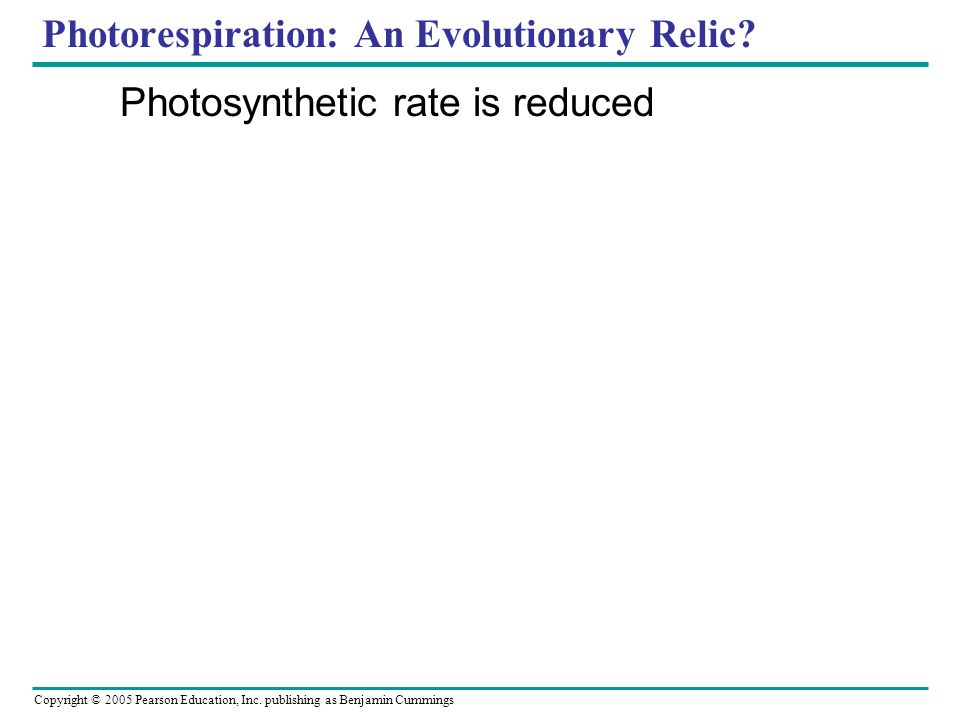 Photorespiration: An Evolutionary Relic