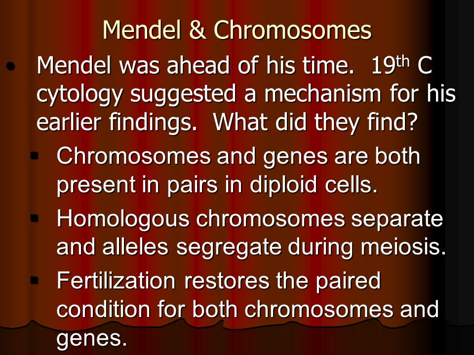 Mendel & Chromosomes Mendel was ahead of his time. 19th C cytology suggested a mechanism for his earlier findings. What did they find