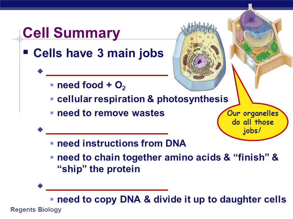 Our organelles do all those jobs!