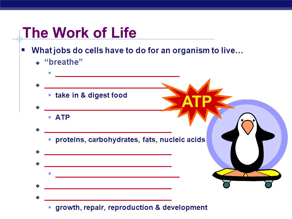 The Work of Life What jobs do cells have to do for an organism to live… breathe _______________________________.
