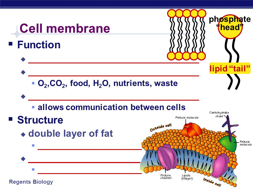 Cell membrane Function Structure _______________________________