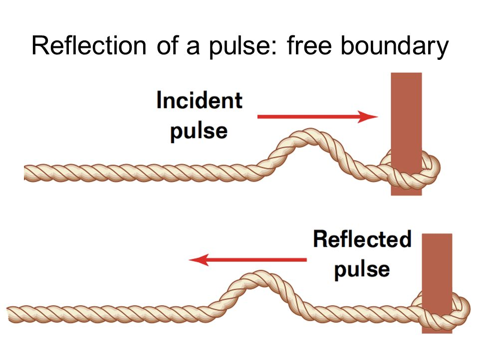 Reflection of a pulse: free boundary