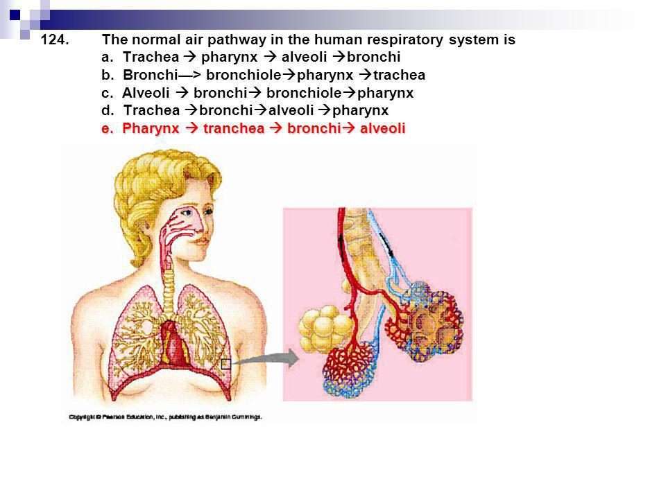 The normal air pathway in the human respiratory system is a