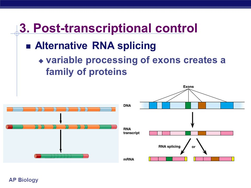 3. Post-transcriptional control