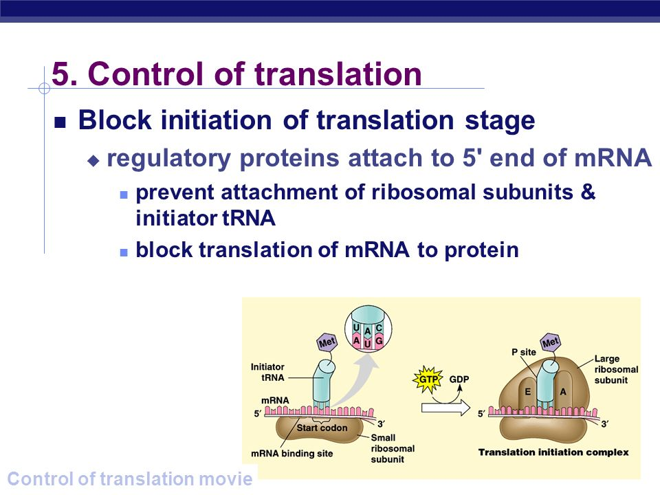 5. Control of translation