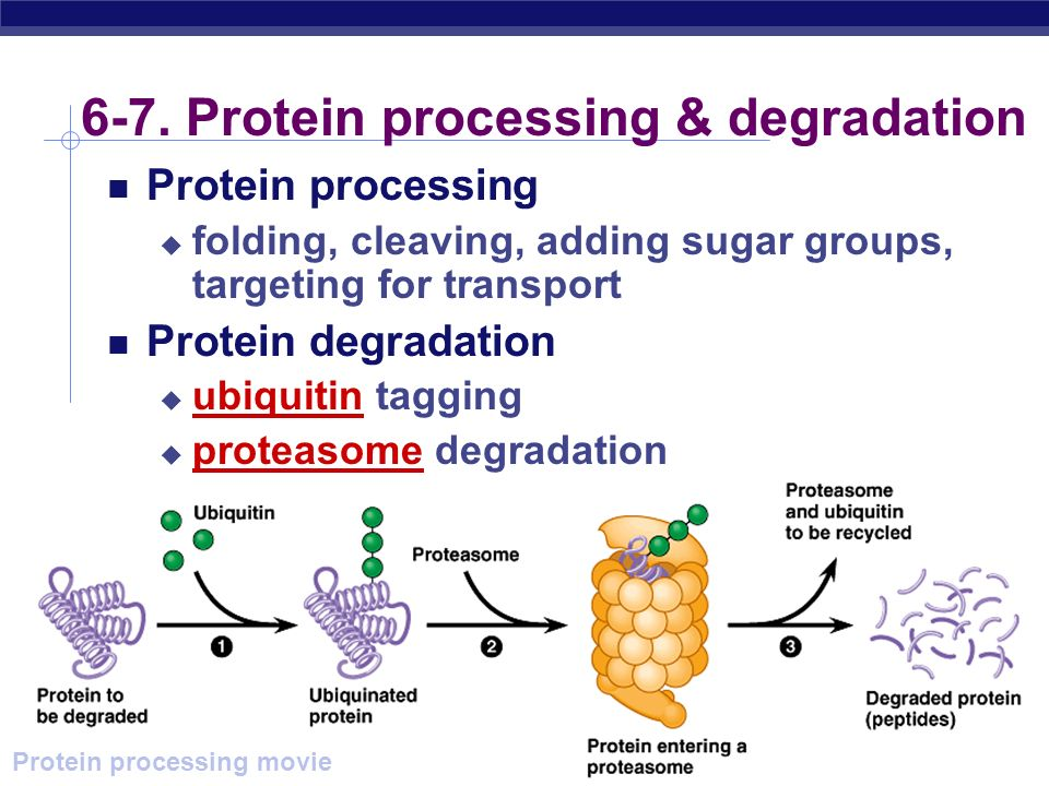 6-7. Protein processing & degradation