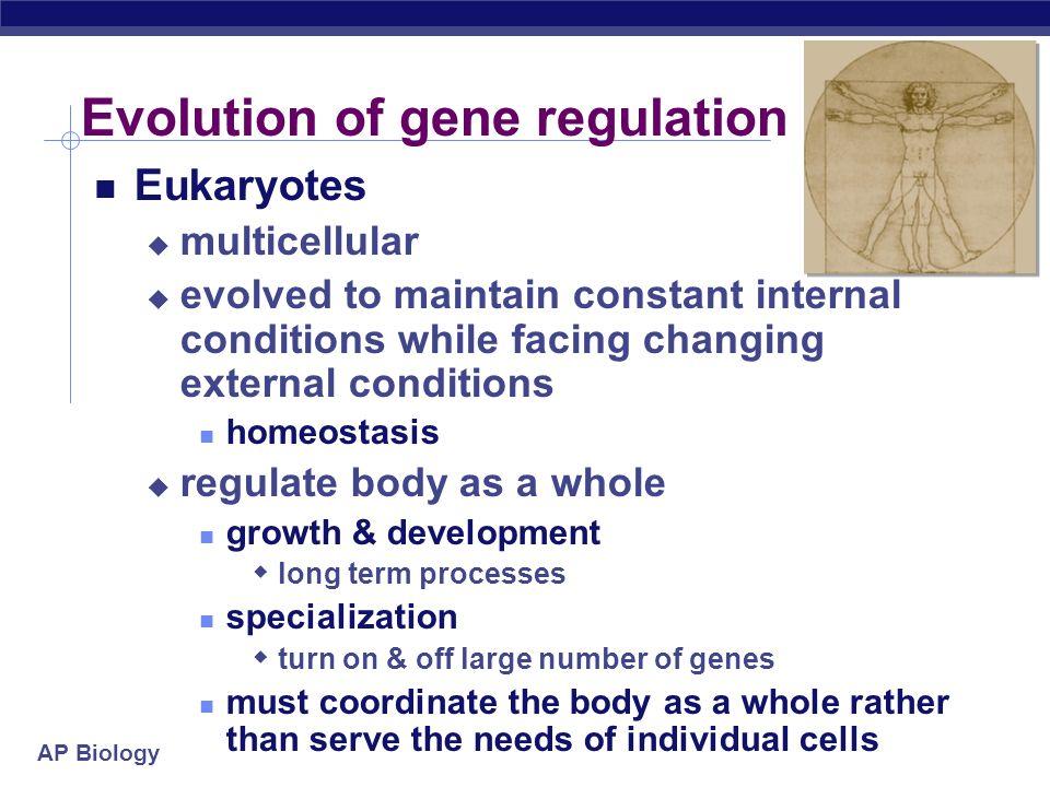 Evolution of gene regulation