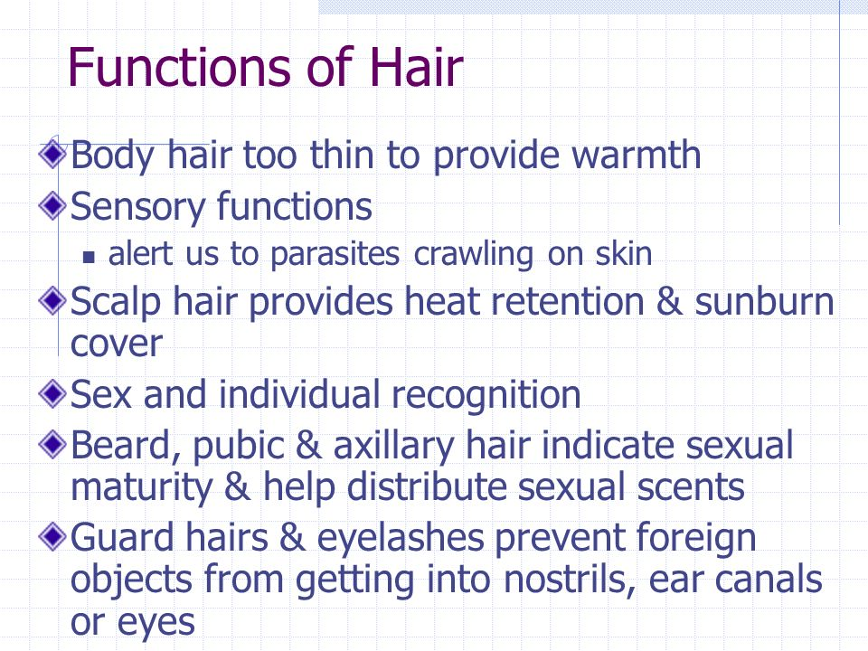 Functions of Hair Body hair too thin to provide warmth