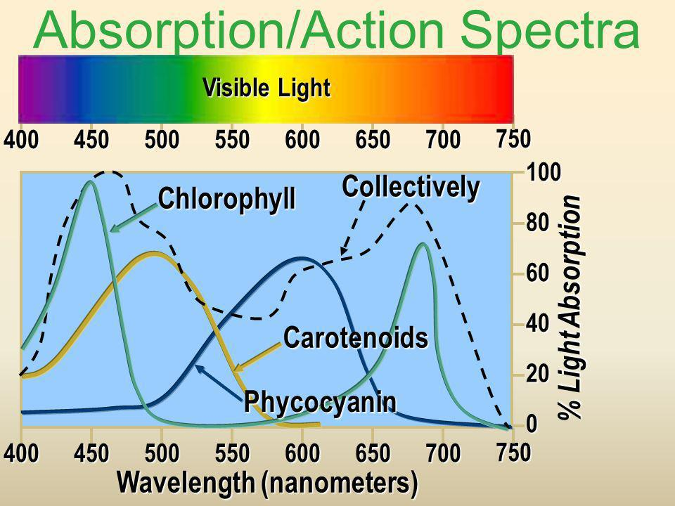 Absorption/Action Spectra