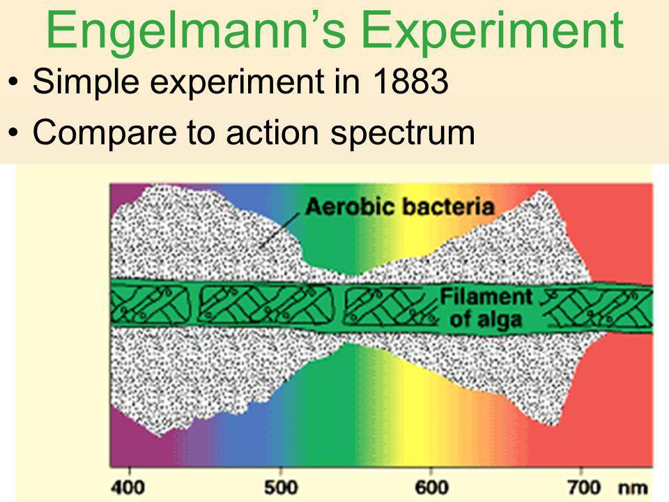 Engelmann's Experiment