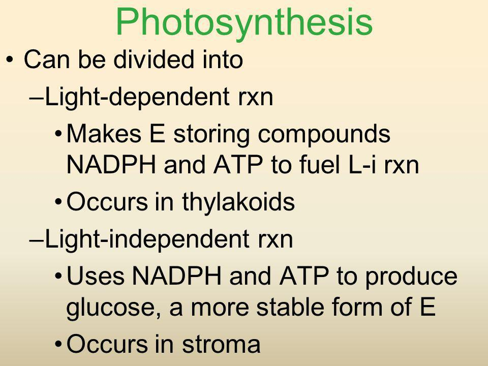 Photosynthesis Can be divided into Light-dependent rxn