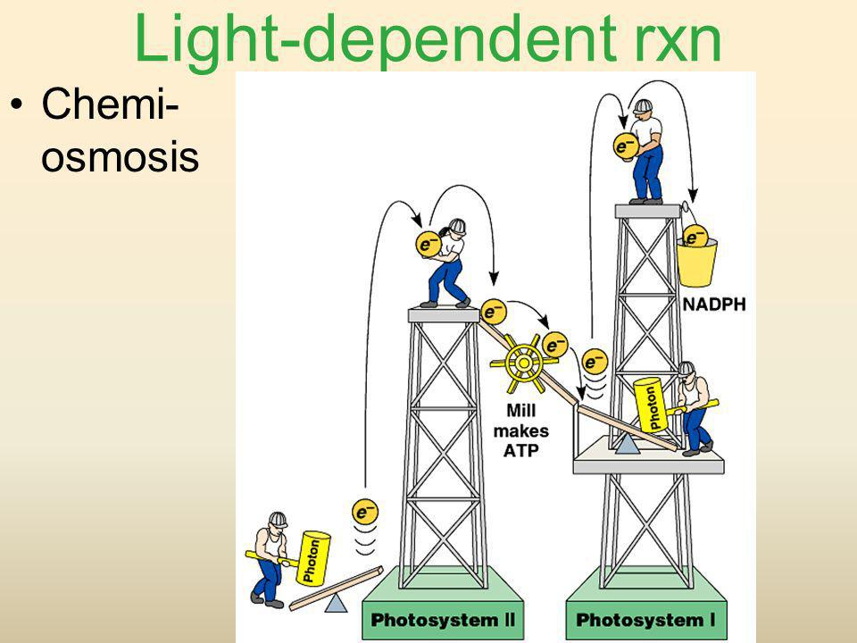 Light-dependent rxn Chemi- osmosis
