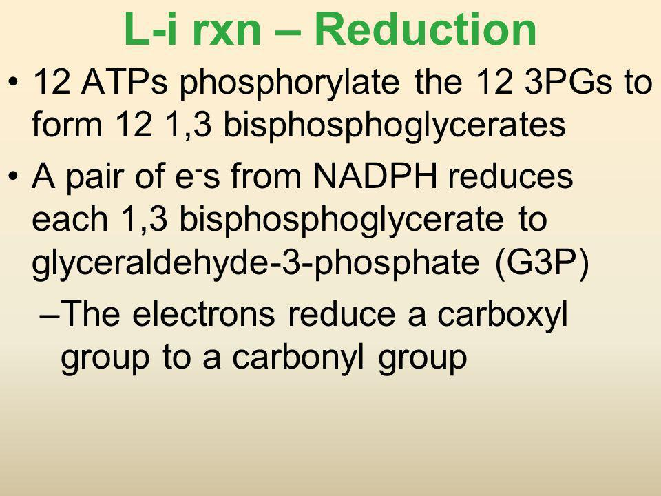 L-i rxn – Reduction 12 ATPs phosphorylate the 12 3PGs to form 12 1,3 bisphosphoglycerates.