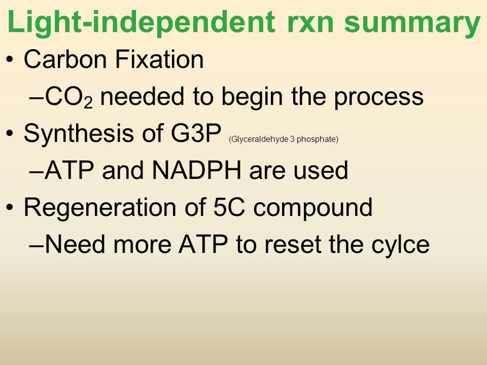 Light-independent rxn summary