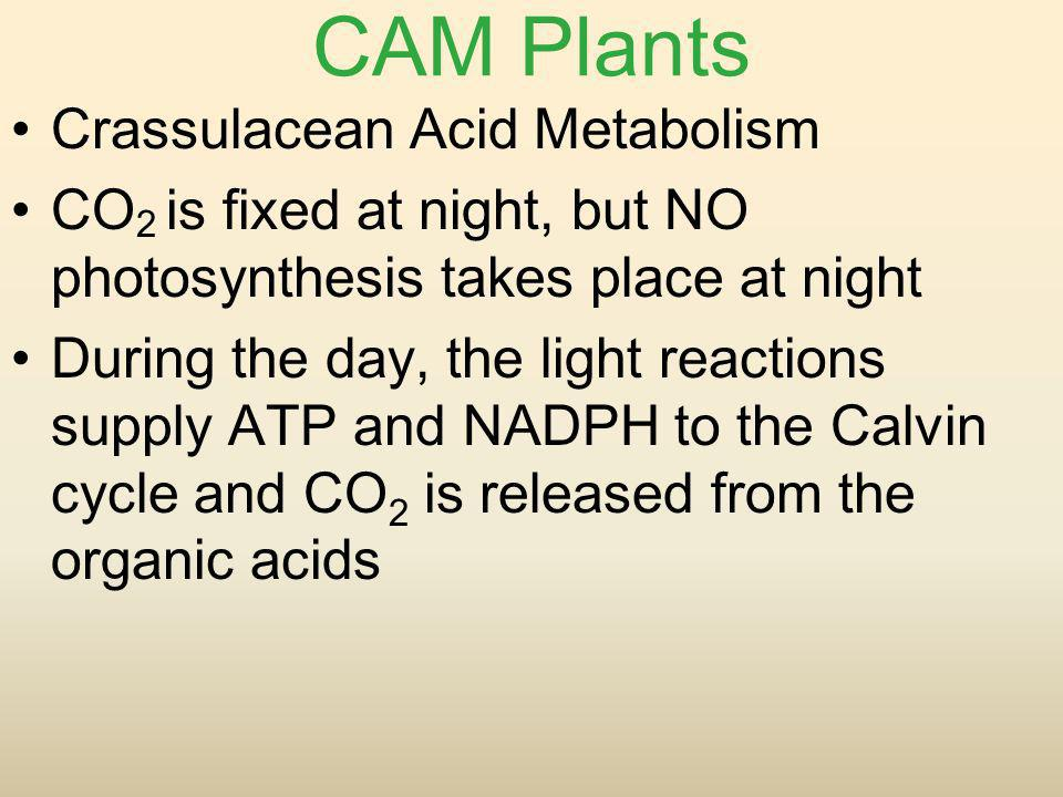 CAM Plants Crassulacean Acid Metabolism
