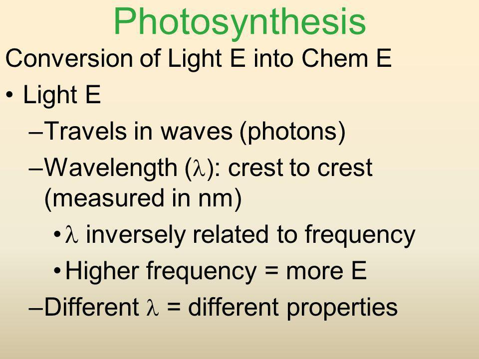 Photosynthesis Conversion of Light E into Chem E Light E